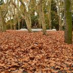 Planes para el otoño