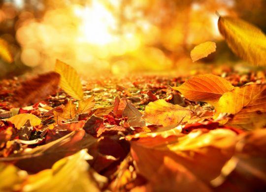 Planes jumpers para hacer en otoño